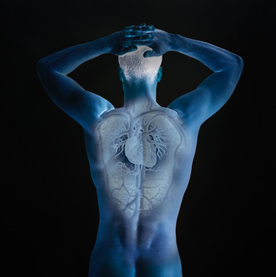 Kretsløpet, hjerter- og lunger. Illustrasjonsfoto: Thinkstock